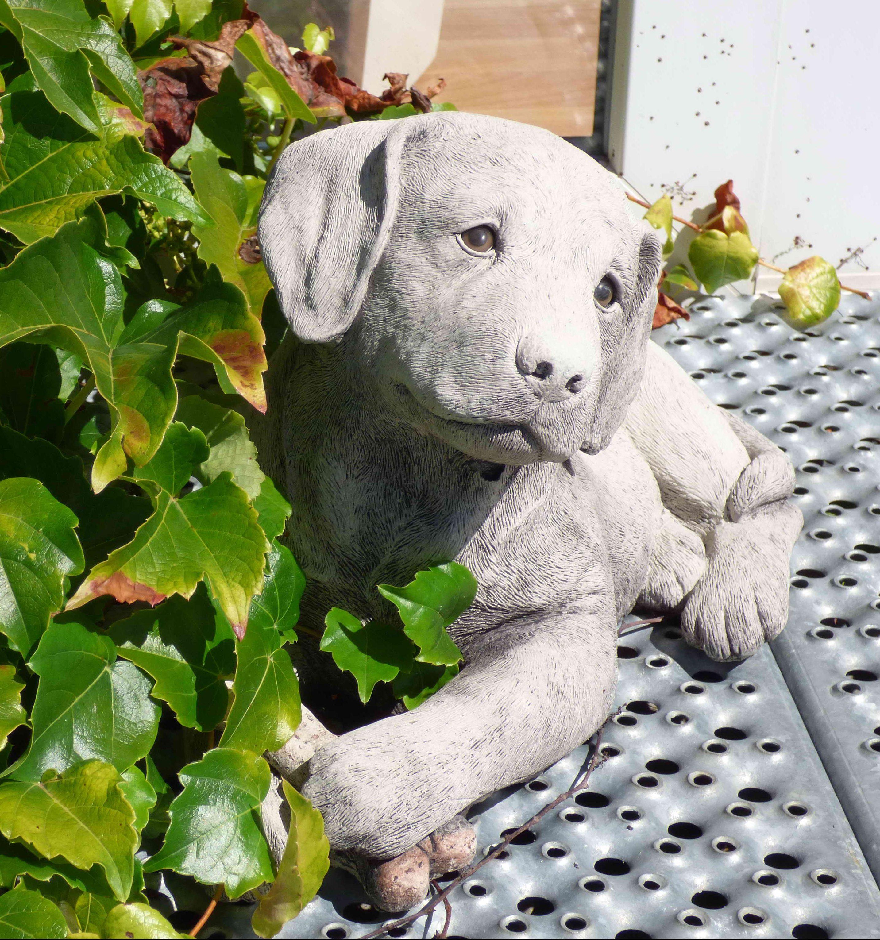 Hund vor der Tür