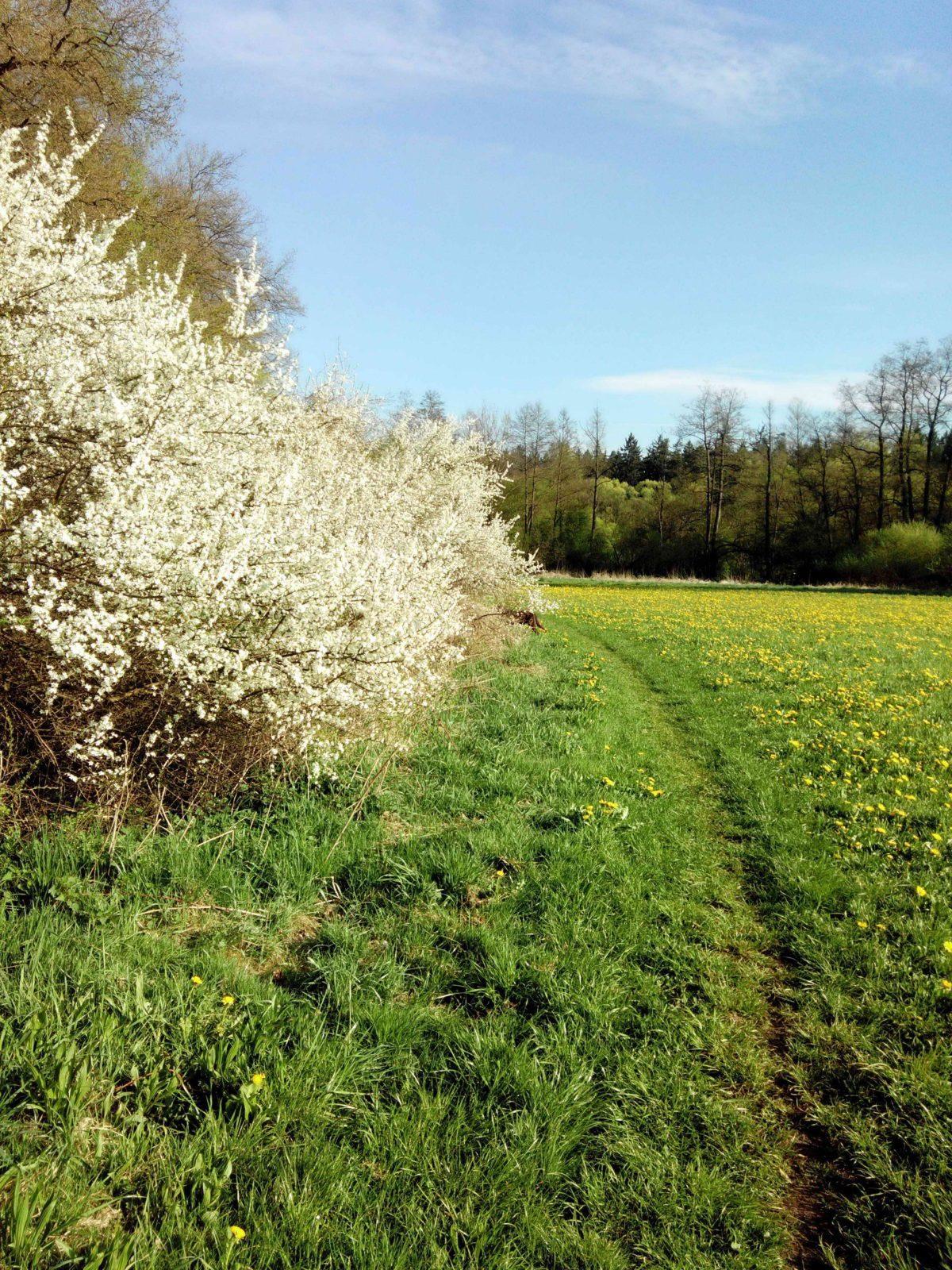 Wiesengrund Frühjahr